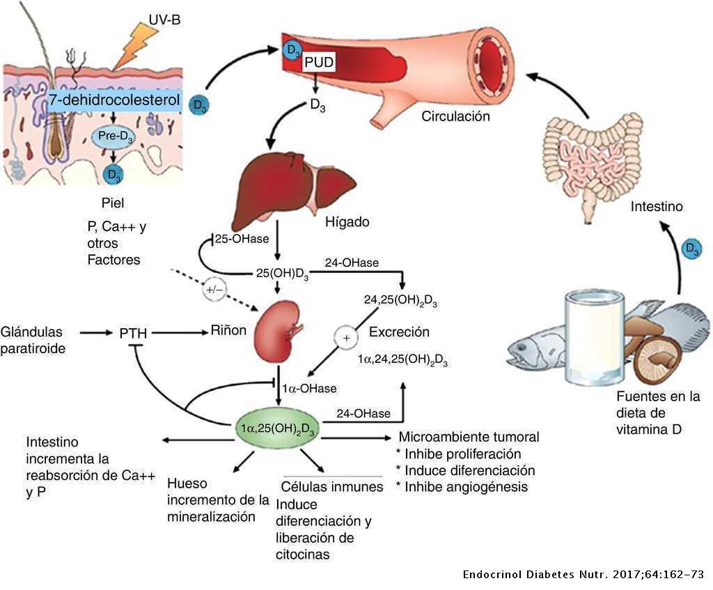 Vitamina D, dónde encontrarla y qué funciones tiene